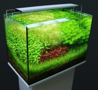 Как выбрать люминисцентные лампы для правильного освещения в аквариуме своими руками
