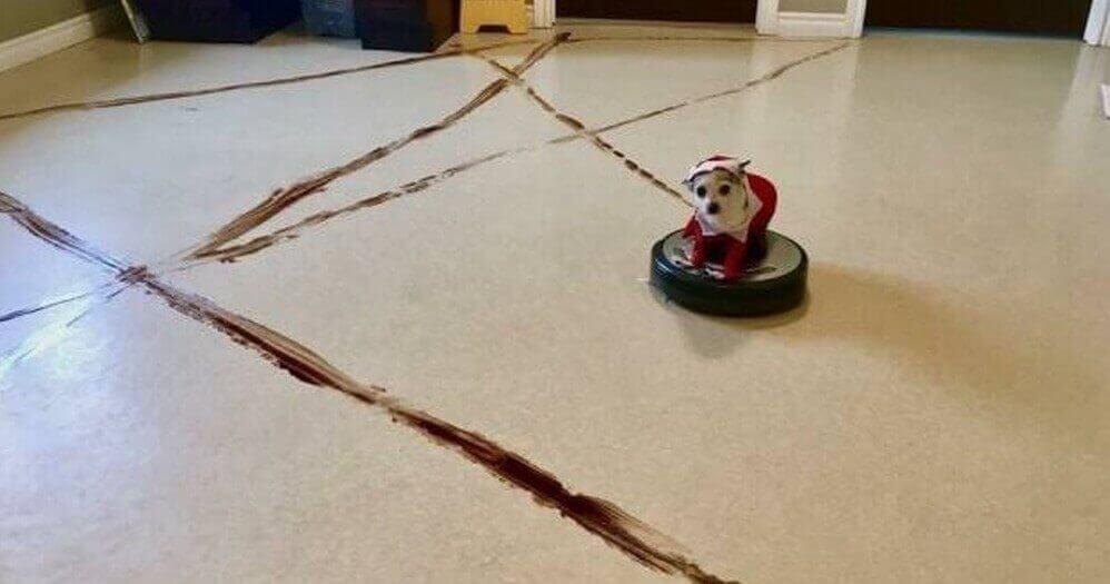 собака на пылесосе