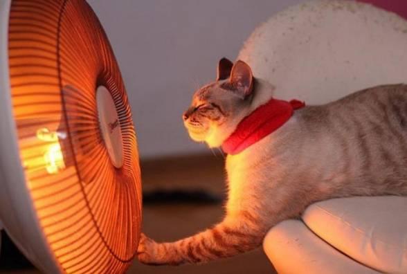 инфракрасный нагрев и кот