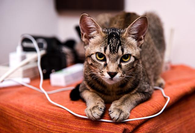 защита, кошка и провод, электротравма