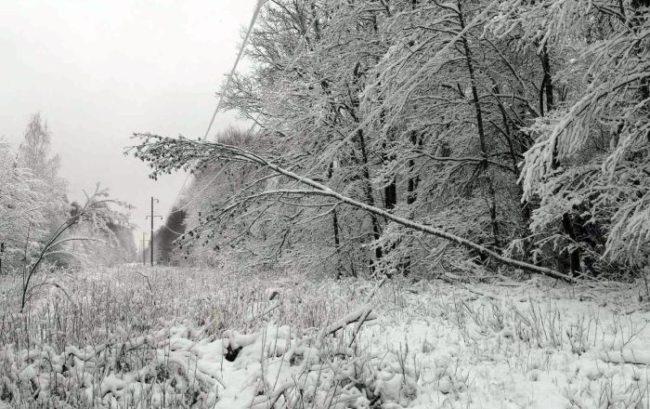 падение на провода дерево